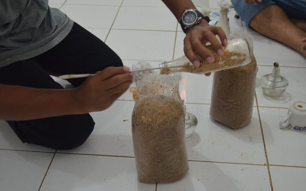 5 Cara Budidaya Baglog Jamur Tiram