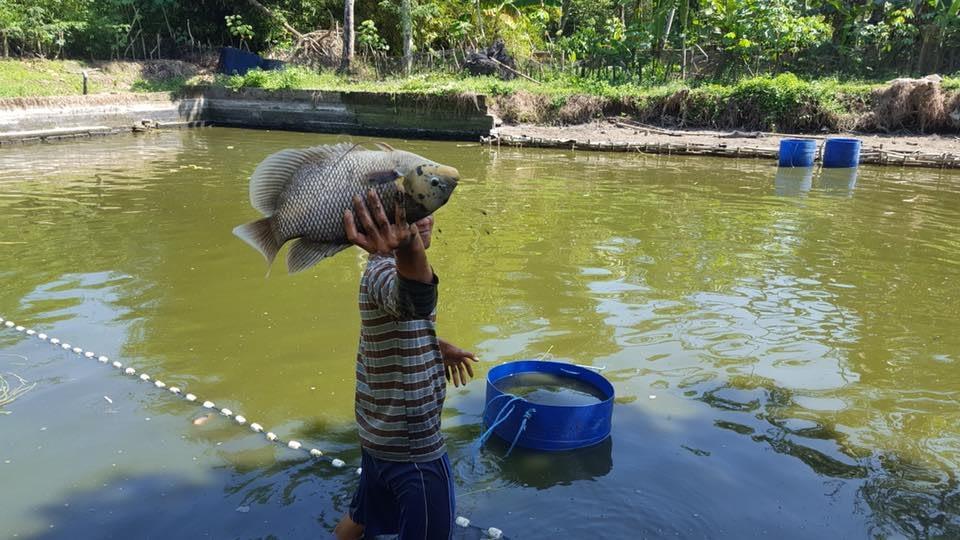 Bisnis Budidaya Ikan