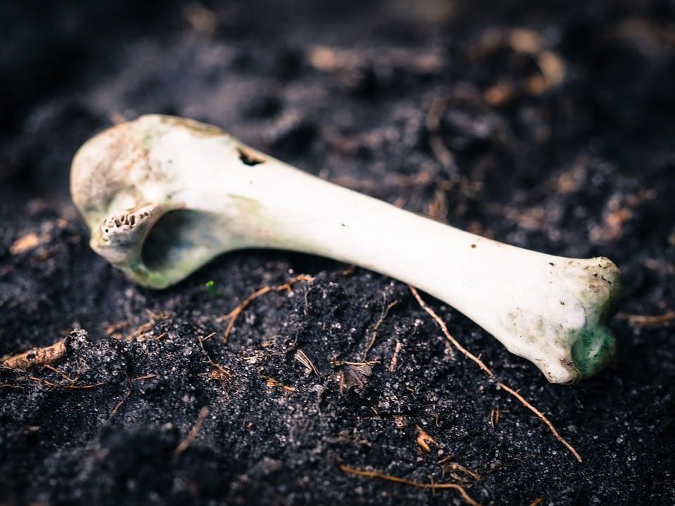 Cara Menghancurkan Tulang Menjadi Pupuk