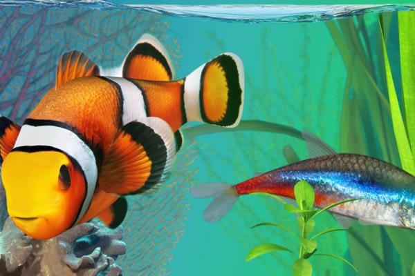 Bisnis Pelet Ikan